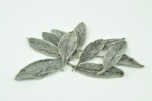 Preserved Soft leaves black