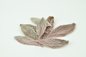 Preserved Soft leaves red