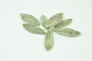 Preserved Soft leaves green