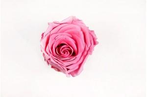 Preserved Rose head XL (7-8 cm) pink
