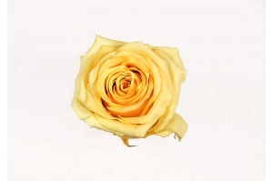 Preserved Rose heads L (5-6.5 cm) yellow