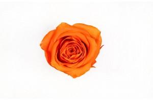 Preserved Rose heads L (5-6.5 cm) orange