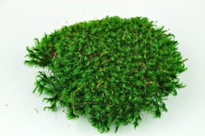 Preserved moss from Provence green
