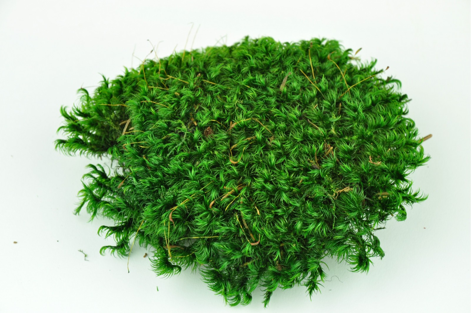 Preserved pole moss from Provence green