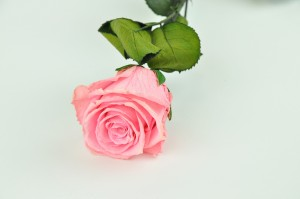 Preserved Rose on stem L (5-6.5 cm) pink