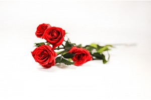 Preserved spray rose 5 heads XS (2-3 cm) red