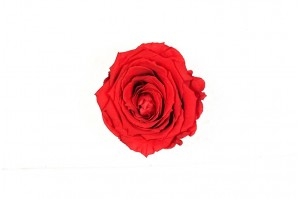 Preserved Rose heads M (3-3.5 cm) red