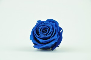 Preserved Rose heads L (5-6.5 cm) blue