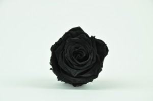 Preserved Rose heads L (5-6.5 cm) black