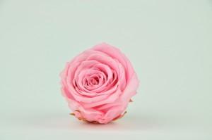 Preserved Rose head XL (7-8 cm) light pink