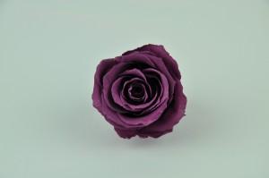 Preserved Rose heads L (5-6.5 cm) purple