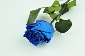 Preserved Rose on stem L (5-6.5 cm) blue