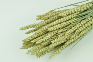 Dry wheat natural