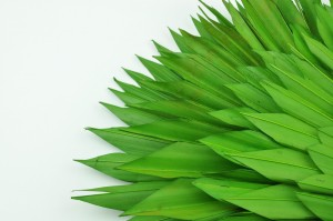 Dried palm sun green