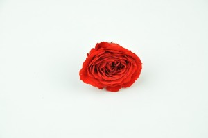 Preserved English Rose heads L (5-6.5 cm) red
