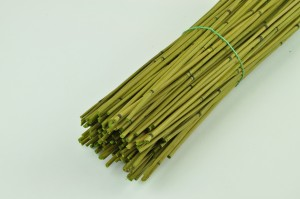Mini bamboo light green