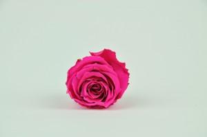 Preserved Rose heads XM  (4-4.5 cm) fuxia