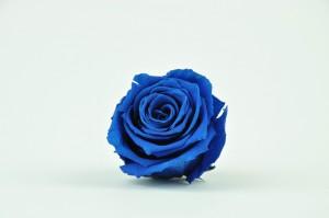 Preserved Rose heads XM (4-4.5 cm) blue