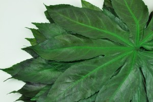 Preserved Aralia leaves green