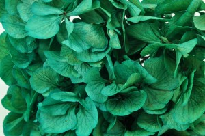 Preserved hydrangea large petals blue