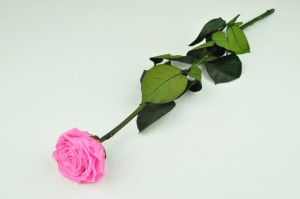 Preserved Rose on stem XL (7-8 cm) pink