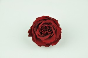 Preserved Rose heads L (5-6.5 cm) red Bordeaux