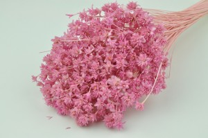 Dried hill flower pink