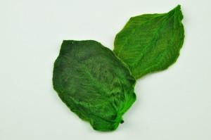 Feuilles de tibouchina stabilisées vertes