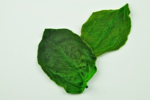 Preserved Tibouchina leaves green