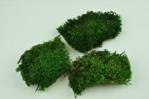 Mousse de Provence stabilisée verte