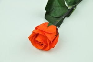 Preserved Rose on stem L (5-6.5 cm) light orange