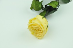 Preserved Rose on stem L (5-6.5 cm) nacre