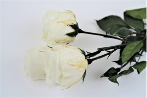 Preserved spray rose 3 heads XS (2-3 cm) white