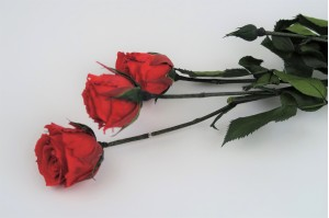Preserved Spray rose 3 heads XS (2-3 cm) red