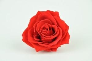 Preserved Rose heads XM (4-4.5 cm) intensiv red (x8)