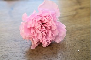 Preserved carnation light pink (4-5 cm)