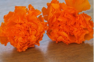 Preserved carnation orange (4-5 cm)