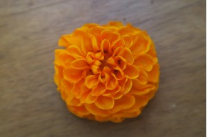 Preserved dahlia orange (3-4 cm)