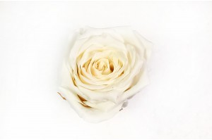 Preserved Rose heads XM (4-4.5 cm) white (x8)