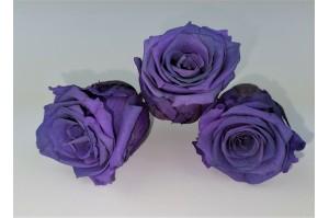 Preserved Rose heads XM (4-4.5 cm) purple (x8)
