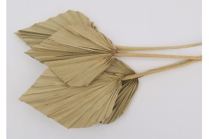 Dried palm spear natural