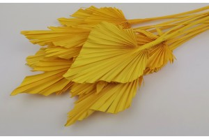 Dried palm spear yellow
