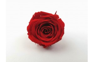 Preserved Rose heads XS (2-2.5 cm) red
