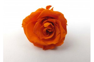 Preserved Rose heads XS (2-2.5 cm) orange