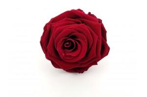Preserved Rose heads L (5-6.5 cm) red