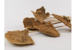 Dried mushroom natural (10 pieces)