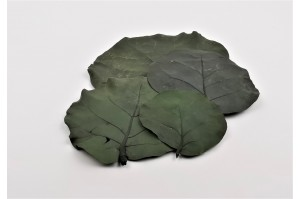 Preserved Coccoloba leaves green