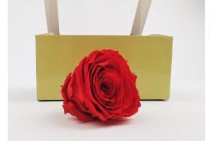 Preserved Rose heads L (5-6.5 cm) light red