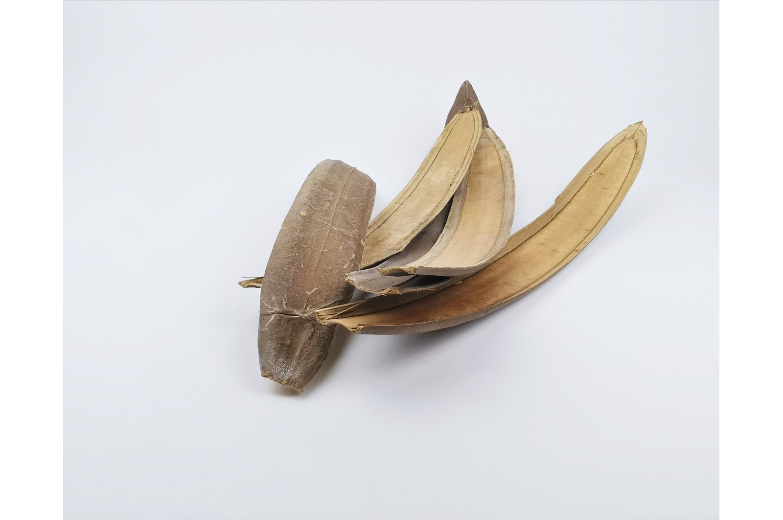 Dried boat nature