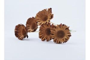 Dried compacta rosetta - nature
